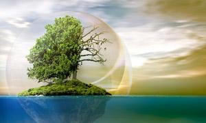 水上防护罩里的一棵树创意高清图片