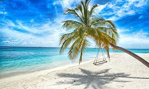 蓝天白云椰树自然风光摄影高清图片