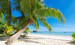 海天一色与在沙滩上的椰树高清图片