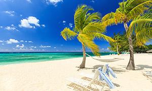 大海椰树与一朵朵白云风景高清图片