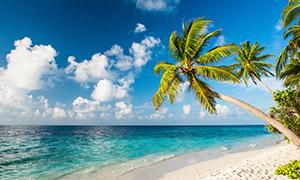 沙滩椰树与海天一色的风景高清图片