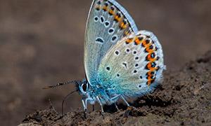 停在土壤上的蝴蝶特写摄影高清图片