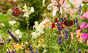 花草丛中的花蝴蝶特写摄影高清图片