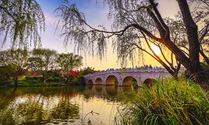 河边草丛树木与拱形桥摄影高清图片
