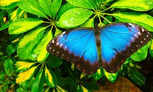 植物绿叶上的蝴蝶特写摄影高清图片