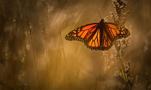 飞入草丛中的蝴蝶特写摄影 澳门线上必赢赌场
