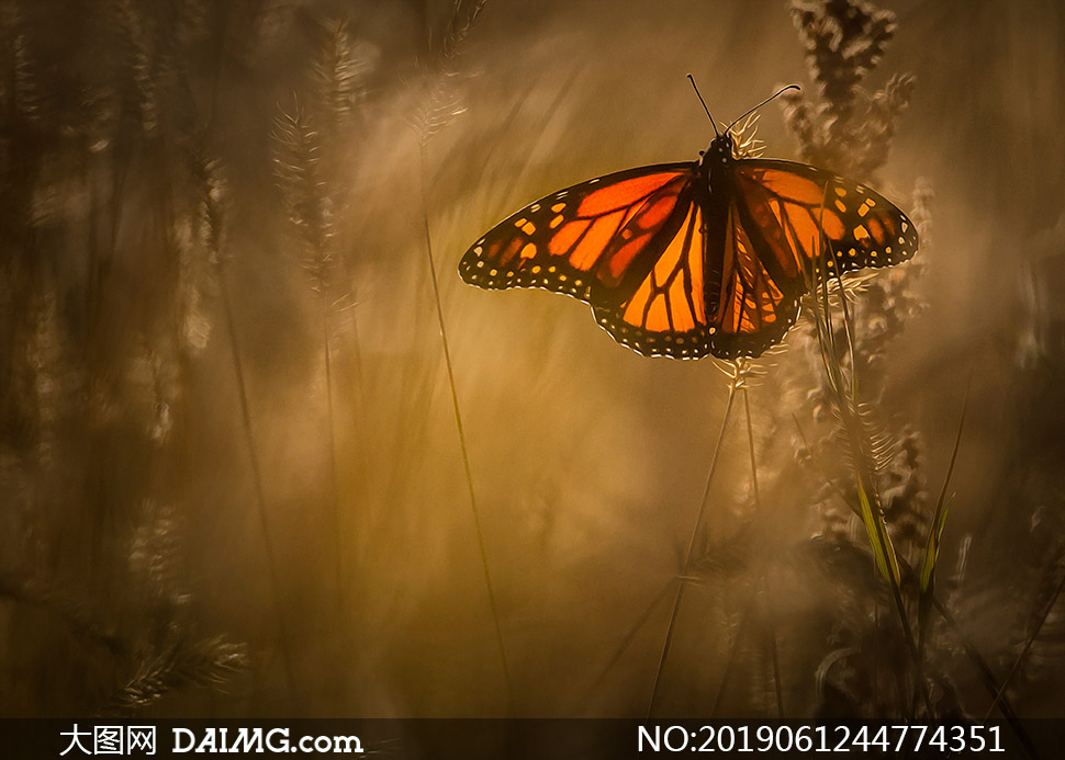 飞入草丛中的蝴蝶特写摄影高清图片