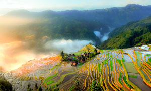云雾缭绕的梯田美景摄影图片
