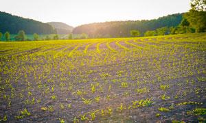 清晨田園農田景觀攝影圖片