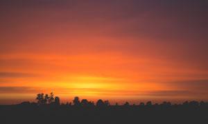 黄昏下的田园树木剪影摄影图片