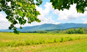 绿荫下的田园草地摄影图片