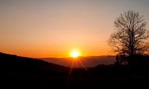 夕阳下山顶大树剪影摄影图片