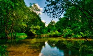 林中寧靜的湖泊美景攝影圖片