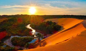 沙漠上的行走的驼队高清摄影图片
