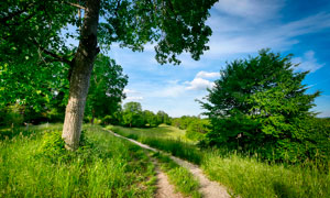 夏季藍天下的田園小路攝影圖片