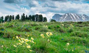 山坡上的绿草和野花摄影图片