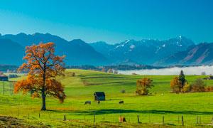 远山脚下美丽的大草原摄影图片
