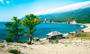 海边沙滩上的房屋和大树摄影图片