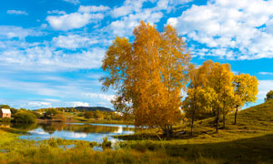 秋季公主湖湖边大树摄影图片