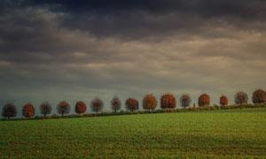 天空云彩大树农田风光摄影高清图片