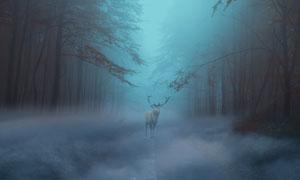 雾气林间公路上的驯鹿摄影高清图片