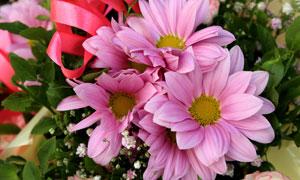 花束里搭配的粉色花朵摄影高清图片