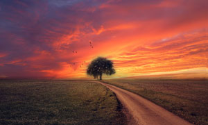 黄昏晚霞下的树木小路摄影高清图片