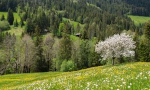 树木与山坡上的花草丛摄影高清图片