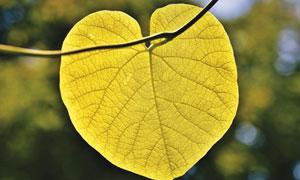 树枝上黄色纹路清晰的叶子高清图片