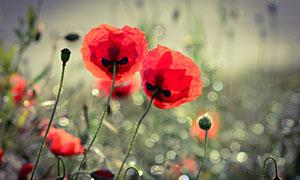 花丛中的红色鲜花特写摄影高清图片