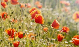 阳光下纷纷绽放的鲜花摄影高清图片