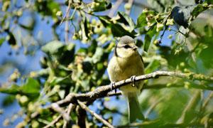 爪子抓緊樹枝的小麻雀攝影高清圖片