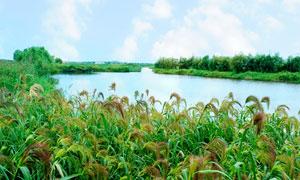哈尔滨白鱼泡湿地公园摄影图片
