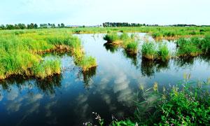 美丽的白鱼泡湿地公园摄影图片