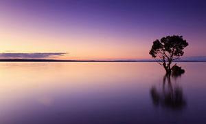 黄昏下的平静的湖泊和树木摄影图片
