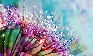 彩色的水珠微距攝影圖片