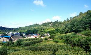 岳池洞宾观美丽乡村摄影图片