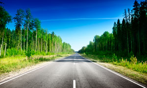 森林中美丽的马路景观摄影图片