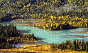 新疆喀纳斯美丽山林摄影图片
