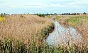 田园草丛和小河流摄影图片