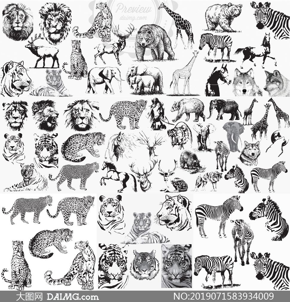 黑白素描老虎與大象等動物矢量素材