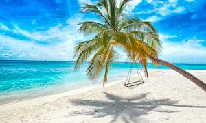 海邊椰樹上休閑吊床攝影圖片