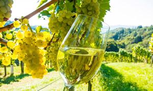 葡萄園與白葡萄酒特寫攝影高清圖片