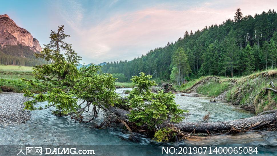 山林中的小河流水摄影图片