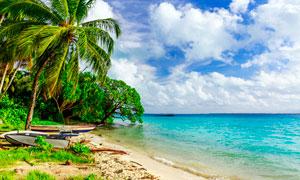 海边沙滩上的小舟和椰树摄影图片
