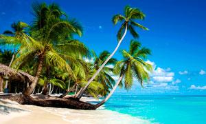 海边美丽的椰树和沙滩摄影图片