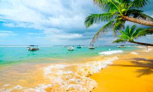 沙滩上的椰树和游船摄影图片