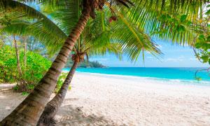 海岛上的沙滩美景摄影图片