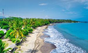 海边沙滩和椰树林摄影图片