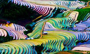 越南下龍灣美麗梯田攝影圖片